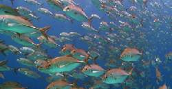 Enjoy a dive tour package and get to interact with schools of fish.