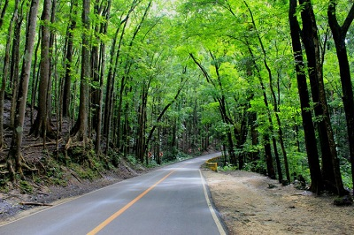 Open your van windows as you pass through the Bilar Manmade Forest on your way to Chocolate HIlls to enjoy the fresh air of the Bohol countryside.